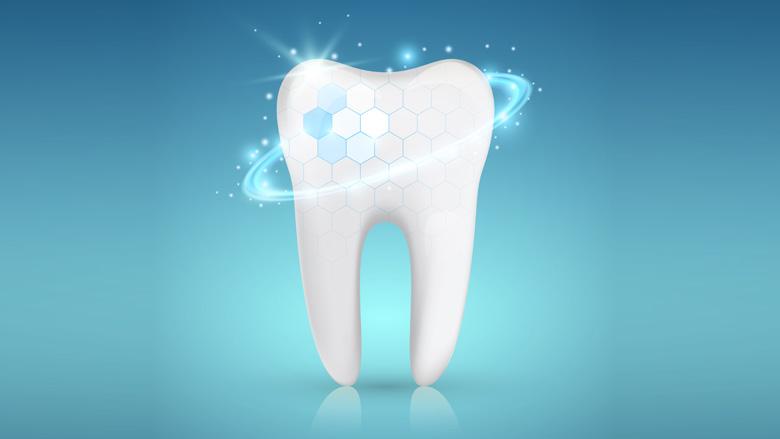 Wissenschaftler entdecken Mechanismus zur Dentinregeneration